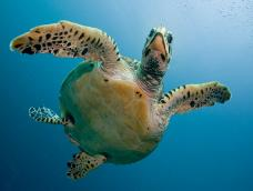 Our Friend The Seaturtle