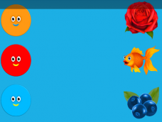 Orange Red Rose Red Fish Blue Blueberry