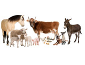 Domestic Animal Jigsaw Puzzle