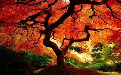 fall tree jigsaw puzzel
