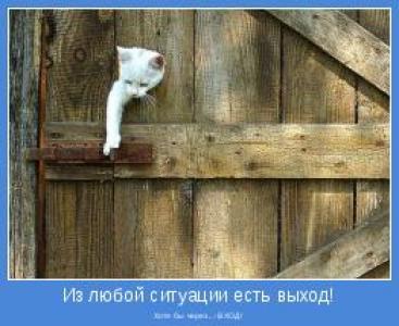 Пазлы Котёнок