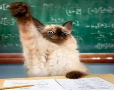 School Cat